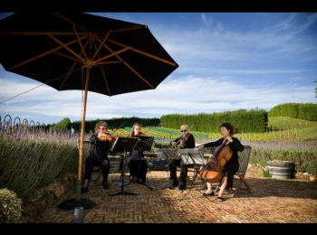 String Quartet Hire